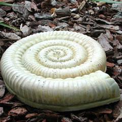 ammonite-fossil.jpg