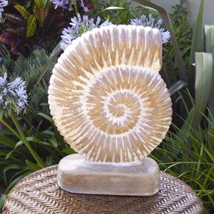 ammonite_upright.jpg