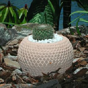 arrow_head_cactus_pot.jpg