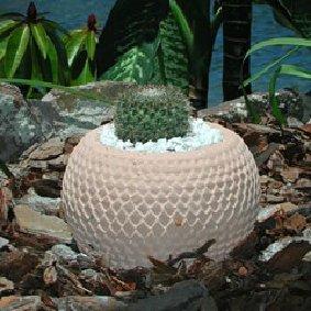 arrow_head_cactus_pot.jpg