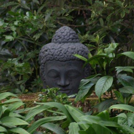 buddha_head_lge_in_trees.jpg