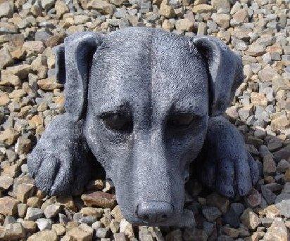 dog_head.jpg
