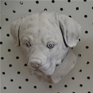 dog_head_1.jpg