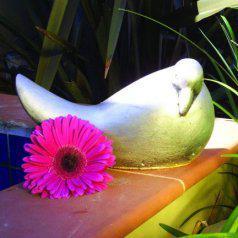 dove_left.jpg