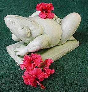frog_reclining.jpg