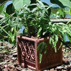gothic-planter.jpg