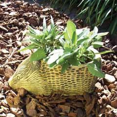 hedgehog_planter.jpg