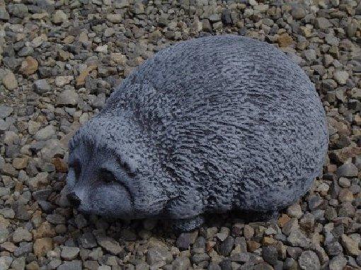hedgehog_short_snout.jpg