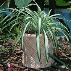 lattice-weave-planter.jpg