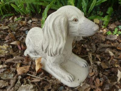 long_haired_dachshund.jpg