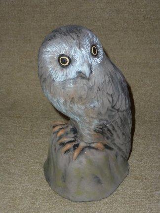 morepork_owl.jpg