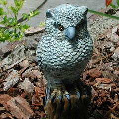 owl-on-branch.jpg