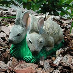 pair-of-bunnies.jpg