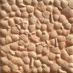pavers_shells.jpg