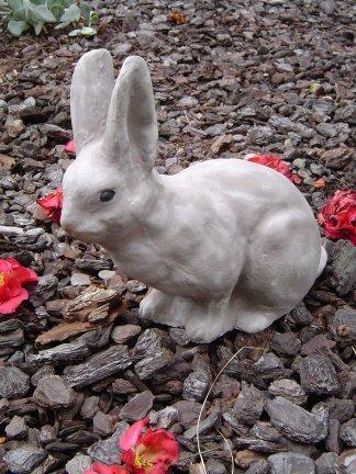 rabbitms004.jpg