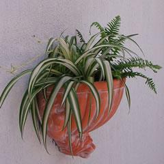 scalloped-wall-planter.jpg