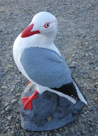 seagull_on_rock.jpg