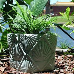 shell-planter.jpg