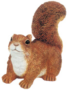 squirreltm016.jpg
