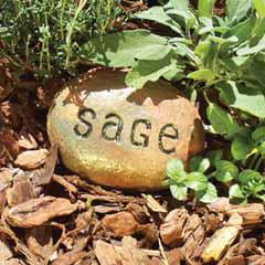 stonesage.jpg