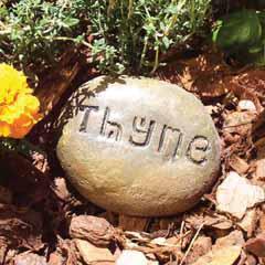 stonethyme.jpg