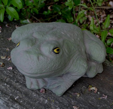 toad_sa029.jpg