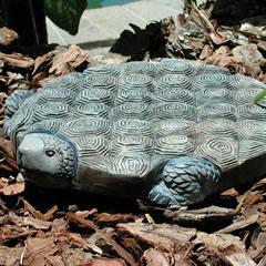 tortoise-step.jpg